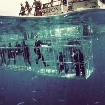 shark-dives-2