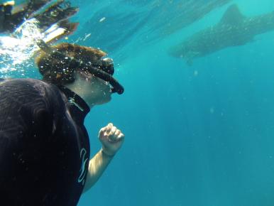 Киты акулы Мексика
