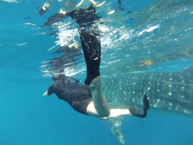 Скорость акулы