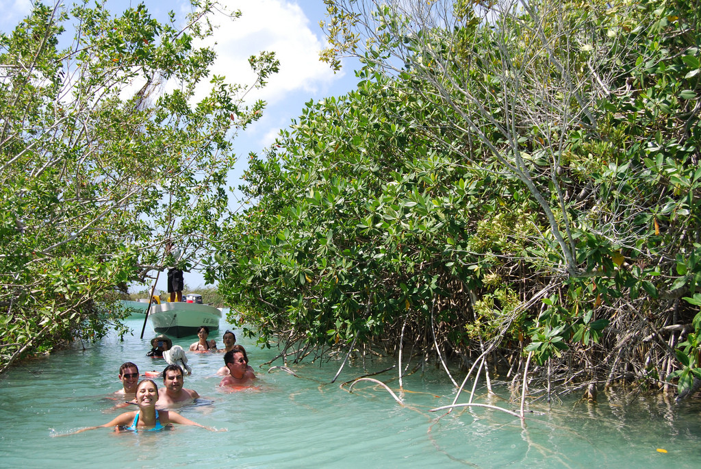Меж мангровых зарослей