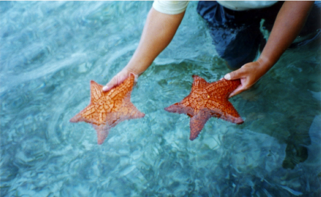 Морские звезды - подарок Сиан Каана