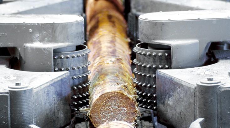 Лесозаготовка в Мексике