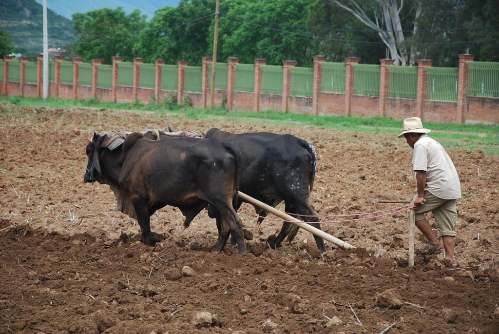 животноводство знасение отрасли в народном хозяйстве чтобы малыш поранил