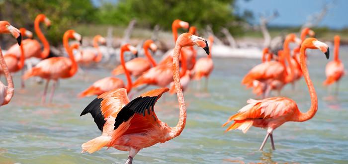 Бескрайние просторы биосферного заповедника Рта Селестун населяют стаи прекрасных розовых фламинго