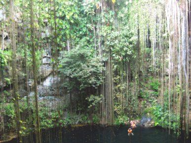 Сенот Ик-Киль. Лиановидный корни свисают до кромки воды