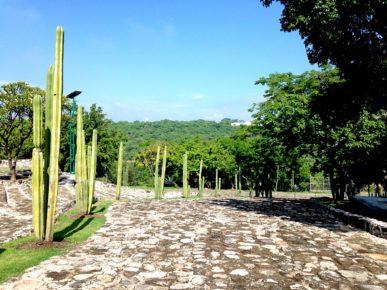 Дорожка с кактусами в Археологической зоне Шочикалько, Мексика