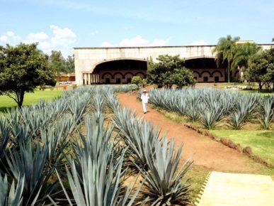 asenda-san-xose-del-refuxio-meksika