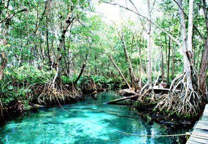 Мангровые заросли в охраняемом биосферном заповеднике Селестун. Мексика