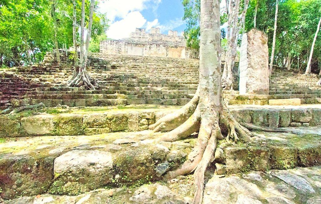 Подступы к древним пирамидам Калакмуля поросли деревьями