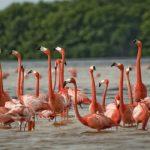 Розовые озера в Мексике
