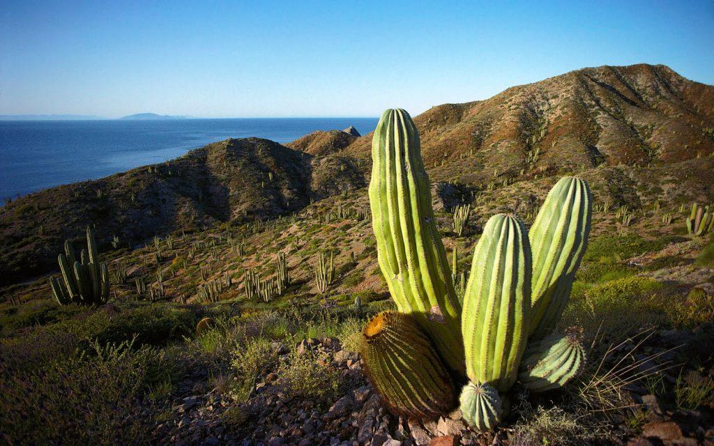 Пустынный ландшафт характерен для севера Мексики.