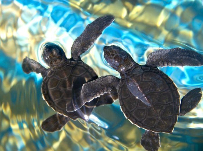 черепаховая ферма на острове женщин