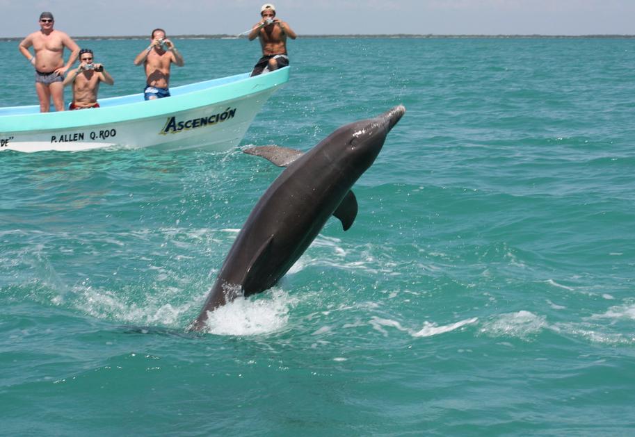 Дикие дельфины в парке Сиан Каан