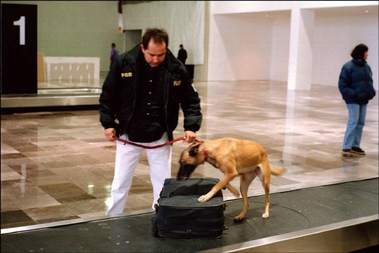 Досмотр багажа специальными службами аэропорта