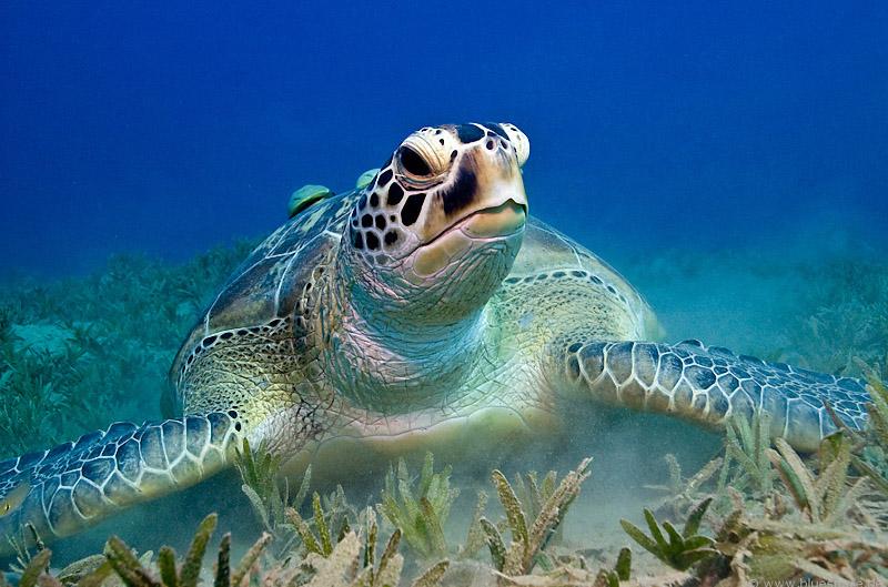 По следам древних Майя  + Плавание с черепахами