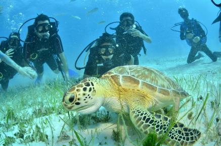 Черепахи в Мексике
