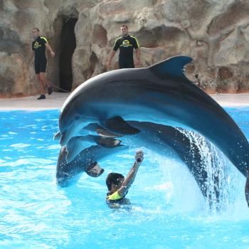 Дельфинотерапия мексика канкун плавание