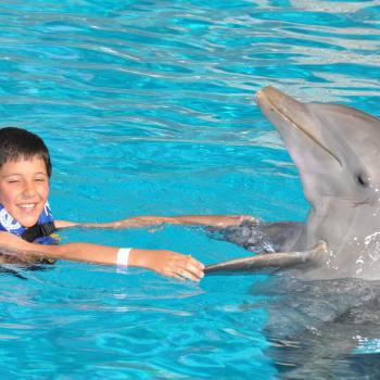 Дельфины Мексика
