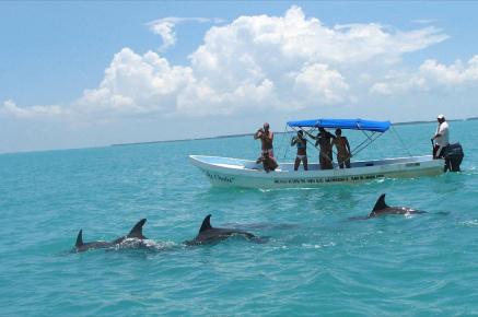 Дельфины сиаан каан