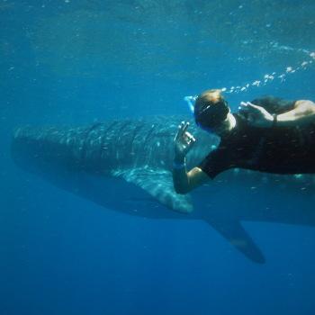 Селфи на фоне акулы!