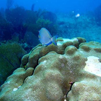 Коралловые рифы на дайвинге в Мексике
