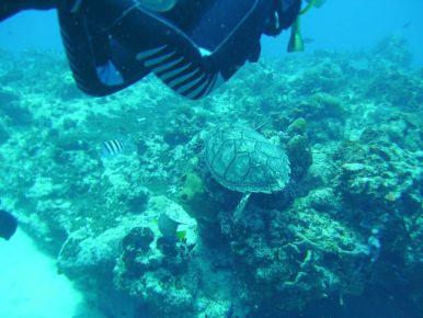 Где поплавать с маской. Канкун