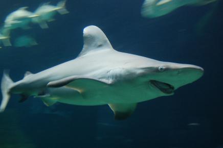 Акулы в Мексике