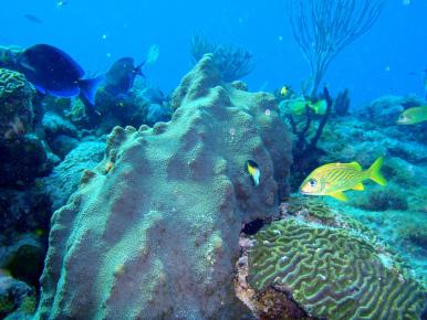 Кораллы. Дайвинг в Мексике