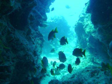 Рыбы на Косумеле. Дайвинг.