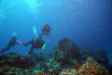 Цветные кораллы в Мексике