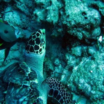 Морская фауна Мексики