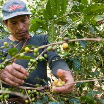 Кофе Мексики