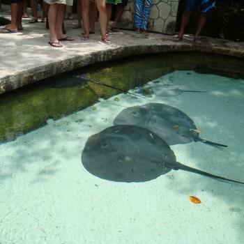 Скаты в Шкарете. Подводный мир в парке Шкарет