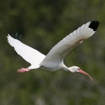 Полет птиц в Мексике. В праке Шкарет много птиц и животных.