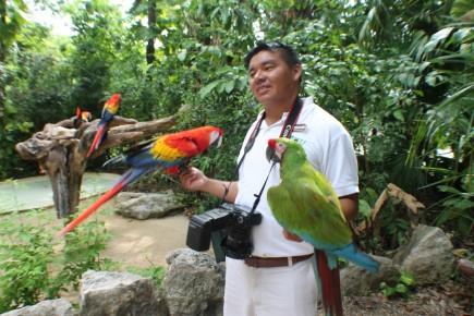 с веселыми попугаями