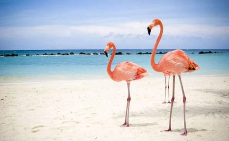 Фламинго в резервации на острове Хольбош