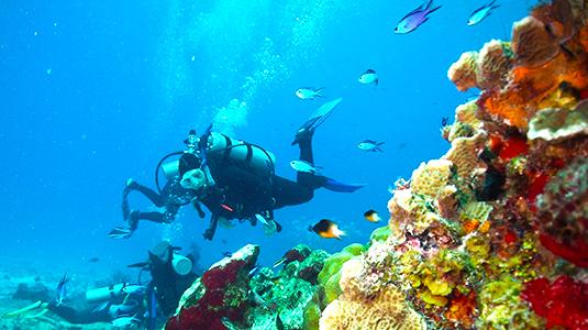 Погружение к всемирно известному рифу Паланкар. Жак ив Кусто, дайвинг, признание