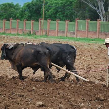 Дедовский способ обработки земли в штате Оахака. Мексика