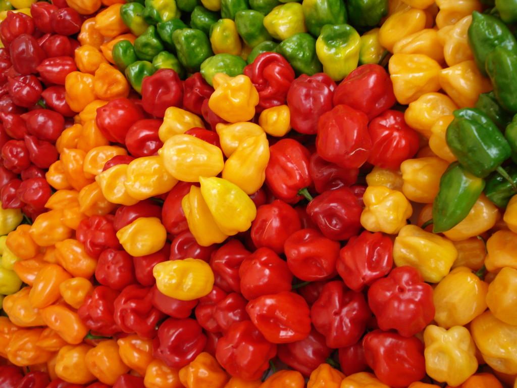 Король-перец. Мексиканский чили абонеро в четырех цветах