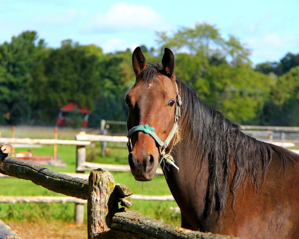 Лошадь на мексиканском ранчо