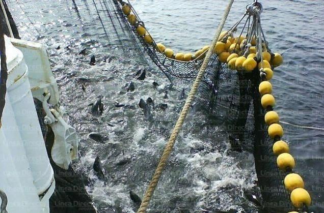 Промышленная ловля тунца в Мексике