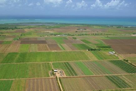 Сельскохозяйственные плантации в Мексике