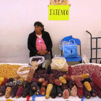 Женщина продает мексиканскую кукурузу маис на рынке в Тласкале
