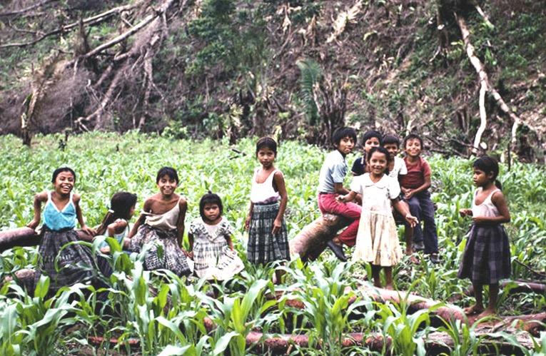 Кекчи. Дети. на маисовом поле