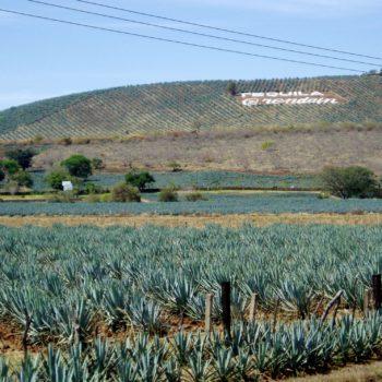 Сантьяго-де-Текила