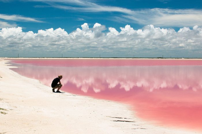 Такой цвет воде придал особый вид фитопланктона, выделяющий пигмент.