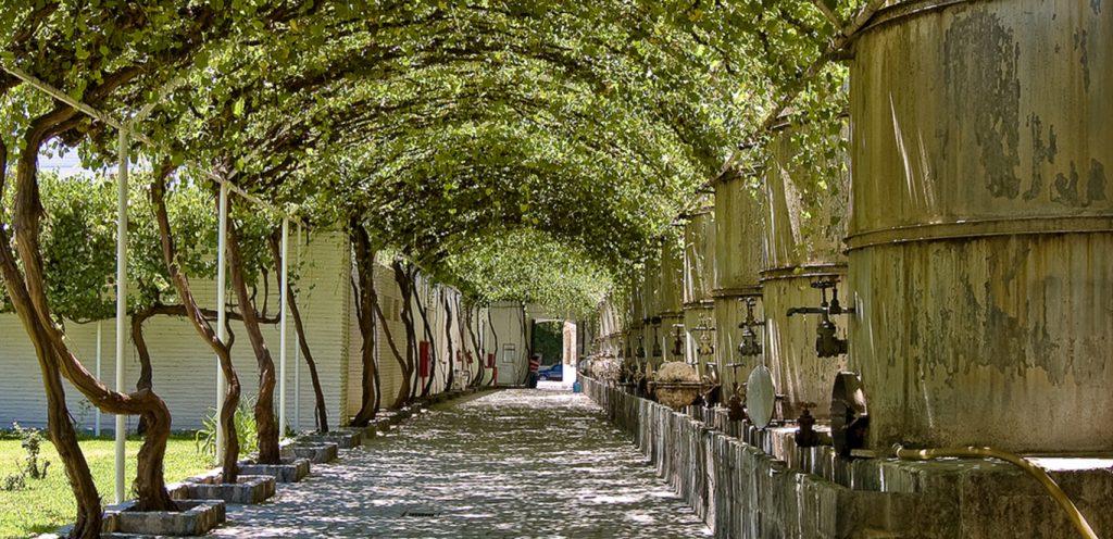 Сан-Лоренцо, виноградники