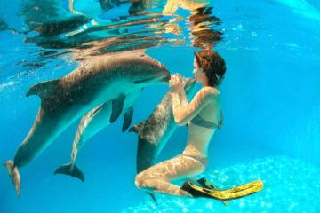 «Влажный тур»: дельфинотерапия + 5 магических сенотов
