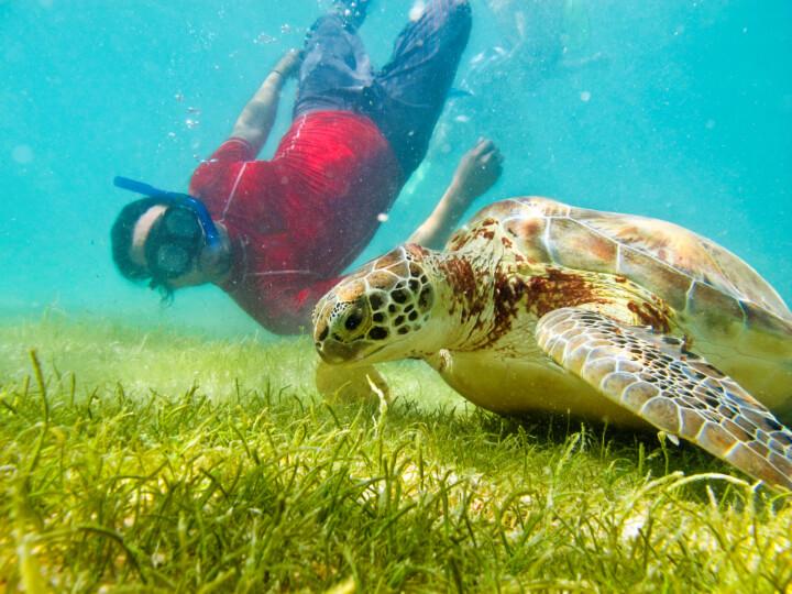 Акумаль – плавание с черепахами в Мексике